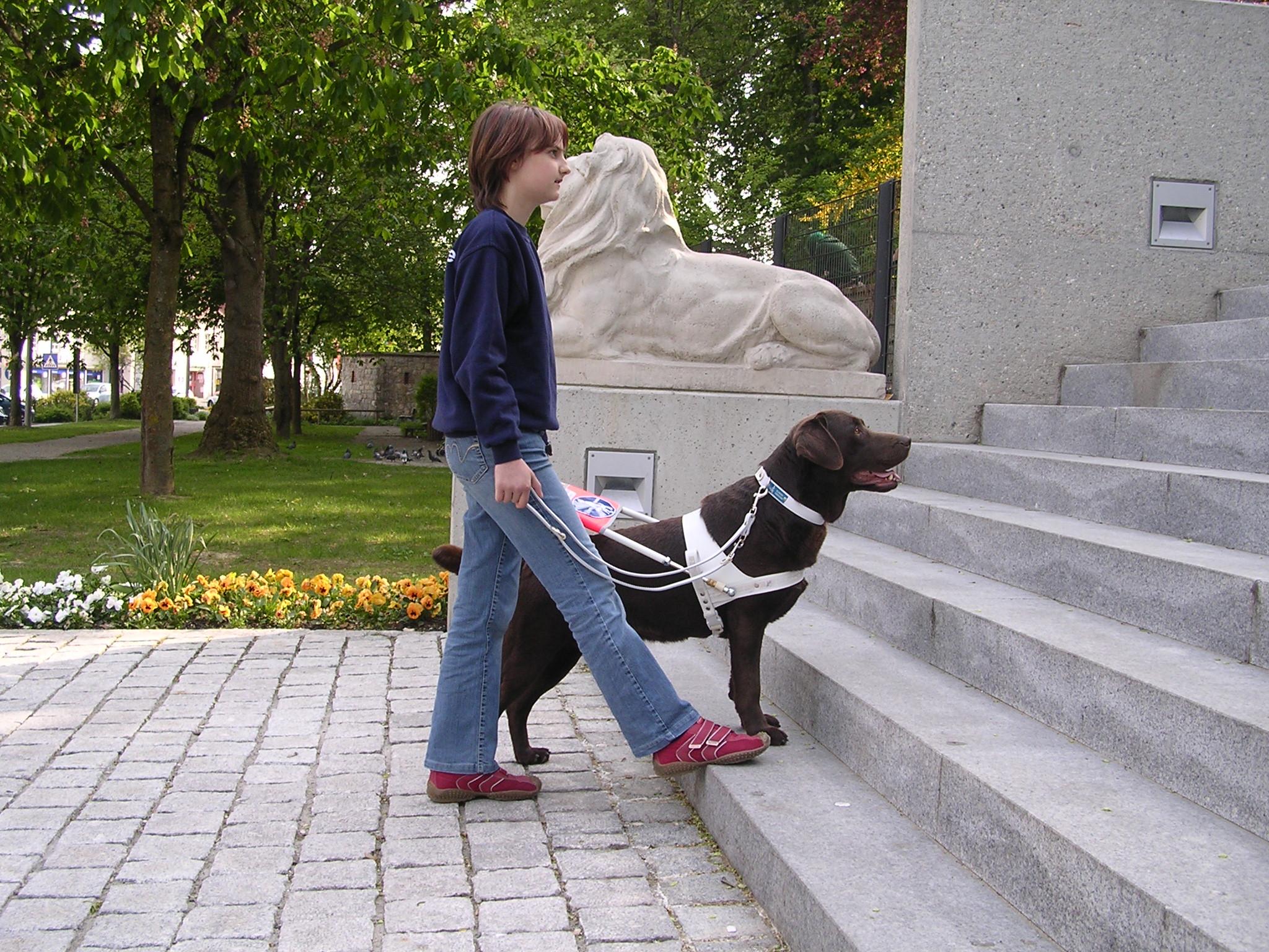 Ausbildung eines Blindenführhundes
