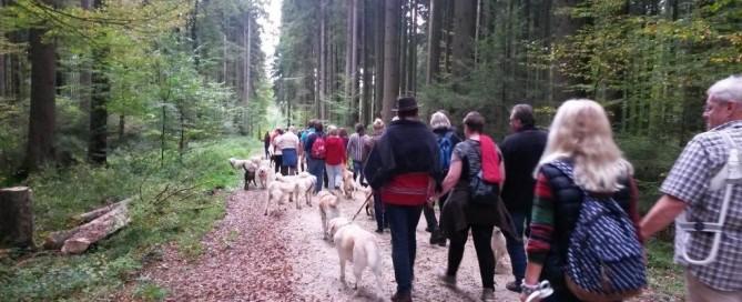 Waldspaziergang 2014