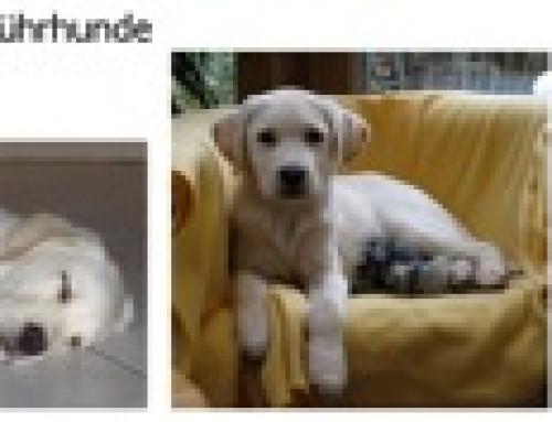 Faszinierende Gemeinsamkeiten zwischen der Ausbildung von Blindenführhunden und der Erziehung von Kindern